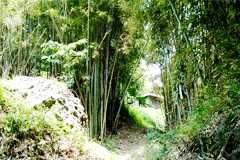 대나무숲길
